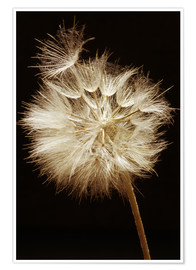 Premium poster  Close-up of dandelion