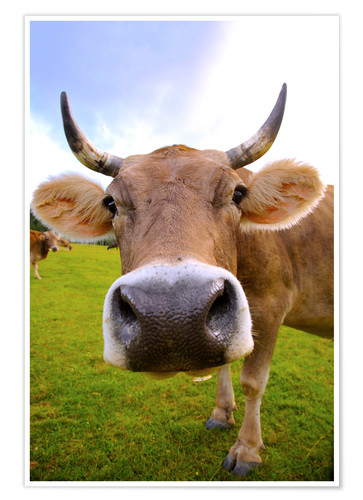 Premium poster Erna the cow