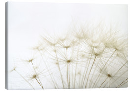 Canvas print  Fluffy dandelion
