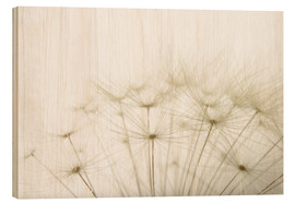 Wood print  Fluffy dandelion