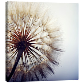 Canvas print  Dandelion closeup