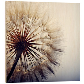 Wood print  Dandelion closeup