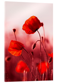 Acrylic print  Poppies at sunset