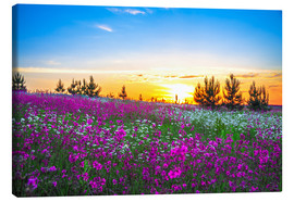 Canvas  Sunrise over a blossoming meadow