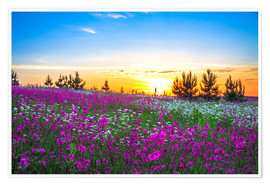 Premium poster Sunrise over a blossoming meadow