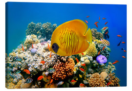 Canvas print  Tropical reef