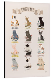 Kanzi Lue - cat breeds french