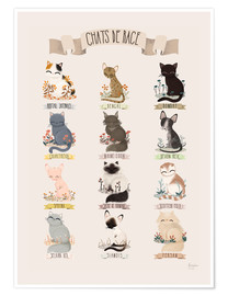 Premium poster cat breeds french