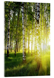 Acrylic print  Birches flooded with light