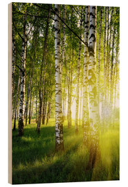 Wood print  Birches flooded with light