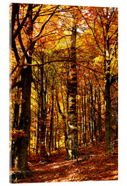 Acrylic print  yellow trees in a forest