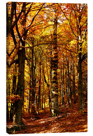 Canvas print  yellow trees in a forest
