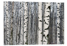 Foam board print  Birch forest in winter
