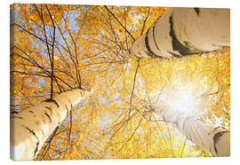 Canvas print  Golden Birch Forest