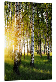 Acrylic print  Birches in summer evening