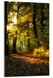 Acrylic print  Evening time in a forest