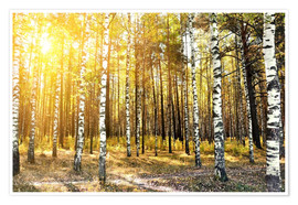 Premium poster  birch trees in a autumn forest