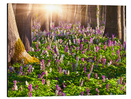 Aluminium print  meadow flowers in spring forest