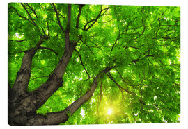 Canvas print  Under a big green tree