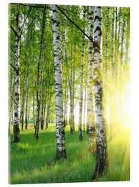 Birches in summer forest