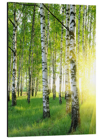 Aluminium print  Birches in summer forest