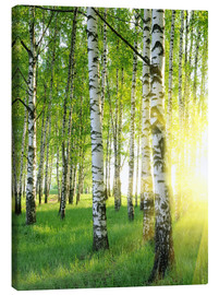 Canvas print  Birches in summer forest