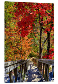 Acrylic print  Wooden stairs in Autumn forest