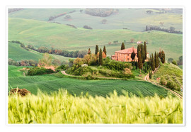 Premium poster typical Tuscany landscape