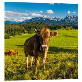 Acrylic print  Funny Cow in the Alps - Michael Helmer