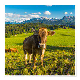 Premium poster  Funny Cow in the Alps - Michael Helmer