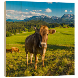 Wood print  Funny Cow in the Alps - Michael Helmer