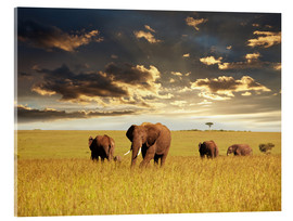 Acrylic print  Elephants in Africa