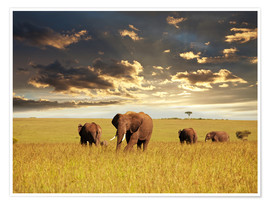 Premium poster  Elephants in Africa