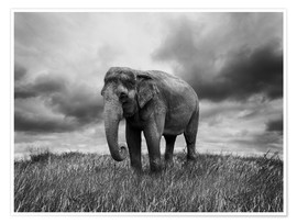 Premium poster Elephant standing in the grass