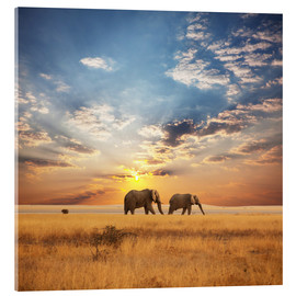 Acrylic print  Elephants on tour