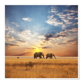 Premium poster  Elephants on Tour