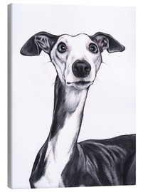 Canvas print  Whippet, blue and white - Jim Griffiths