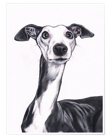 Poster  Whippet, Blue and white - Jim Griffiths