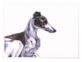 Premium poster Whippet illustration, colour pencil drawing
