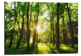 Aluminium print  Spring in the woods - Oliver Henze
