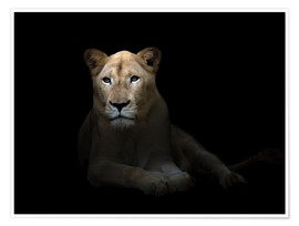 Premium poster  White Lioness in the dark night