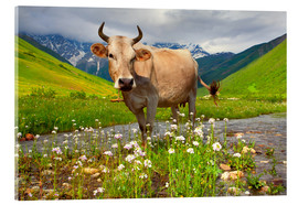 Acrylic print  Cattle on a mountain pasture