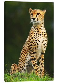 Canvas print  Portrait of an African Cheetah