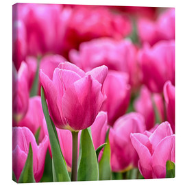 Canvas  Tulips in pink - Filtergrafia