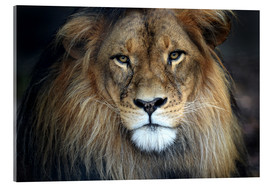 Acrylic print  Your Majesty