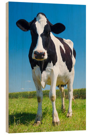 Wood print  Cow - Black and White