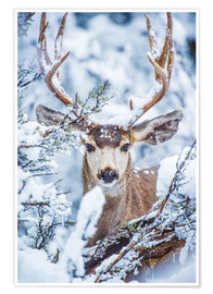 Premium poster  Snowy stag