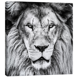 Canvas print  King Lion - black and white