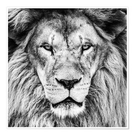 Premium poster King Lion - black and white
