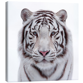 Canvas  The white tiger